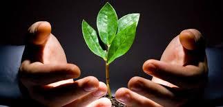 O bom senso no direito ambiental