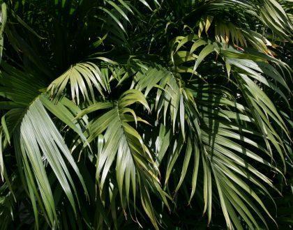 Joinville cria primeira Reserva Biológica