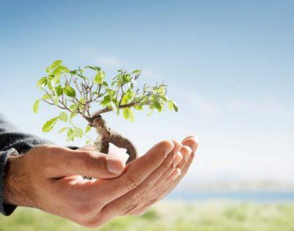 Quando é permitido suprimir vegetação de área de preservação permanente