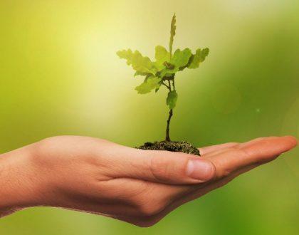 Nova lei para licenciamento ambiental será debatida em reunião da CMA e CCJ