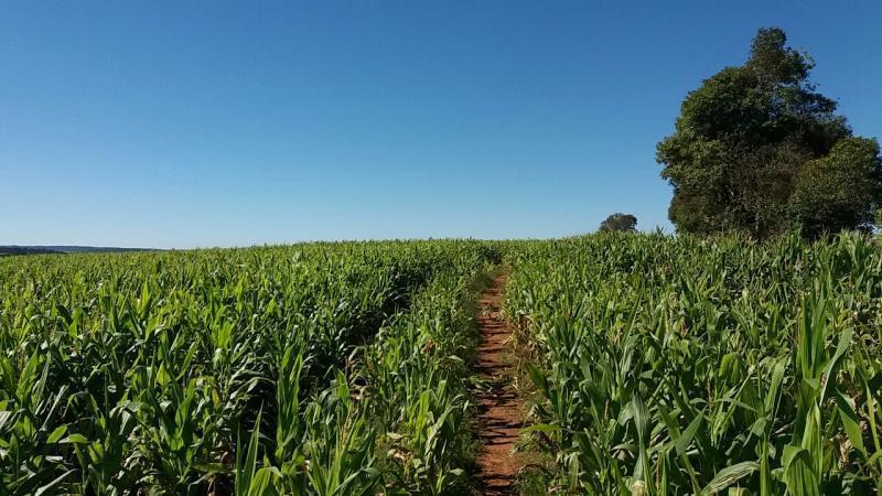 Não há mais prazo para Cadastro Ambiental Rural, mas PRA vai até 2020