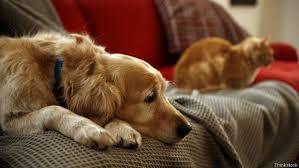 Quem for flagrado abandonando animal de estimação pode ser multado