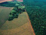 Área de preservação permanente pode ser incluída no cálculo da Reserva Legal